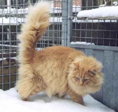 Image of Garfield-Womble fra Walaskjalf