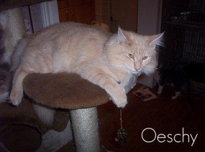 Image of Gismo II van Queen Noor