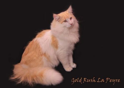 Image of Gold Rush la Peyre