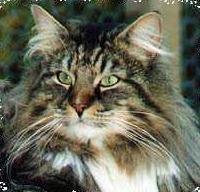 Image of Gomorran's King Kreole