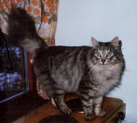 Image of Grorudmyra's Asmal
