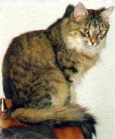 Image of Guldfakse's Nolida