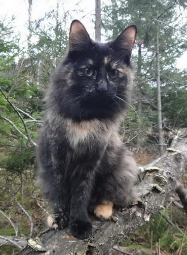 Image of Gyllenstrålen's Fiona
