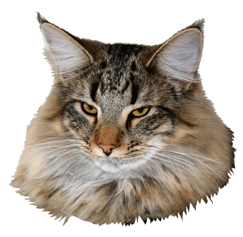Image of Just Catnap's Kashaya