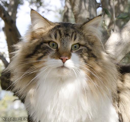 Image of Just Catnap's Sander, DVM, DSM
