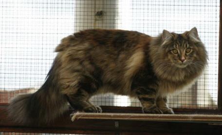 Image of Karat'Cats Virginia Woolf, DM