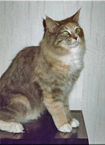 Image of Kardborrens Hannah