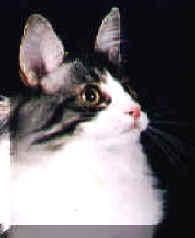 Image of Kvilles Yin