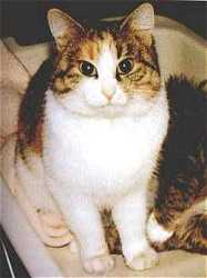 Image of Lucy