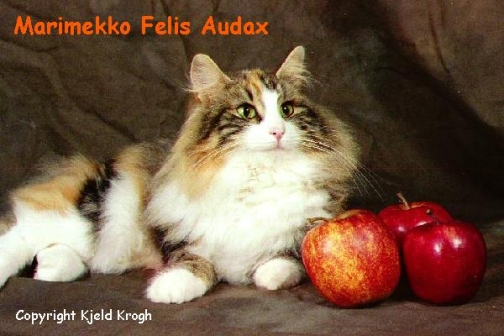 Image of Marimekko Felis Audax, DM