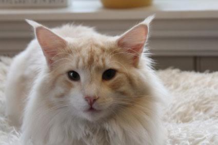 Image of Miazeeze Stray Cat Strut