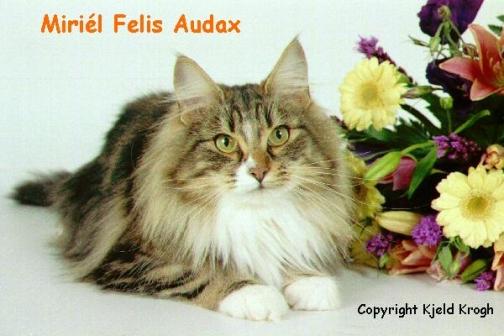 Image of Miriél Felis Audax