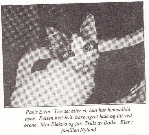 Image of Pan's Eirin