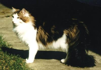 Image of Pan's Tacho