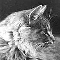 Image of Pjotr av Karibo