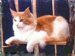 Image of Popsys King Lion
