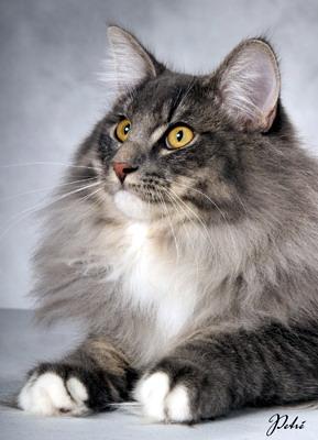 Image of Restless Lynx