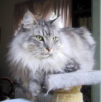 Image of Romeo