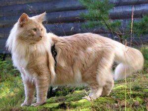 Image of Runsvik's Hobbe, DM