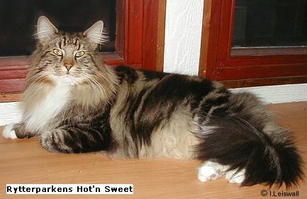Image of Rytterparkens Hot'n Sweet