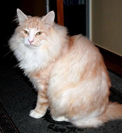 Image of Skaujenta's Dreng