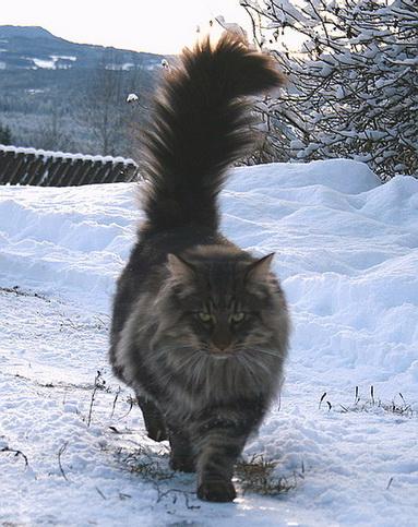 Image of Skaujenta's Iver