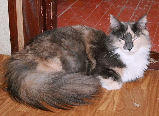 Image of Skaujenta's Nanna