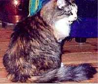 Image of Tiger-Lilly