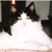 Image of Tigressan's Eliza