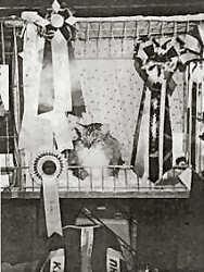 Image of Torvmyra's Baldrian
